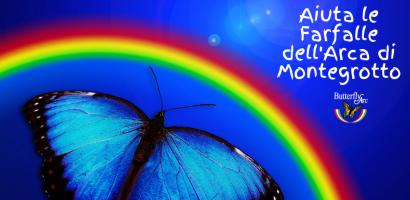 img aiuta le farfalle butterfly arc