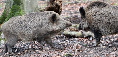 img richiesta risarcimento danni fauna selvatica